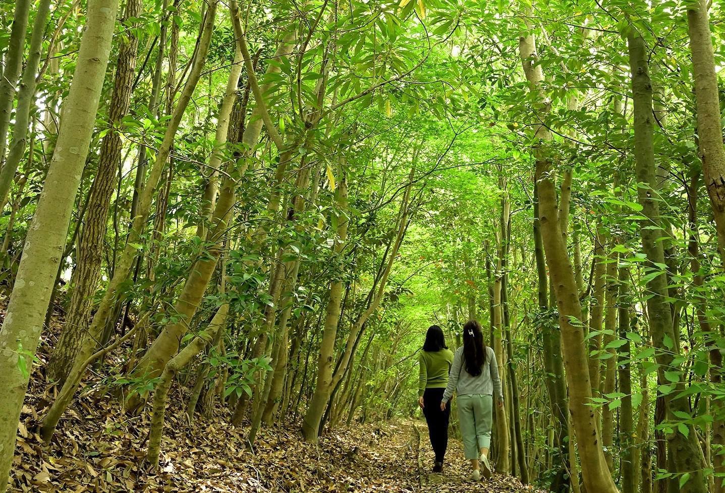 社員が在来種を植樹し育てた森